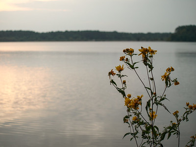 Lake Crabtree