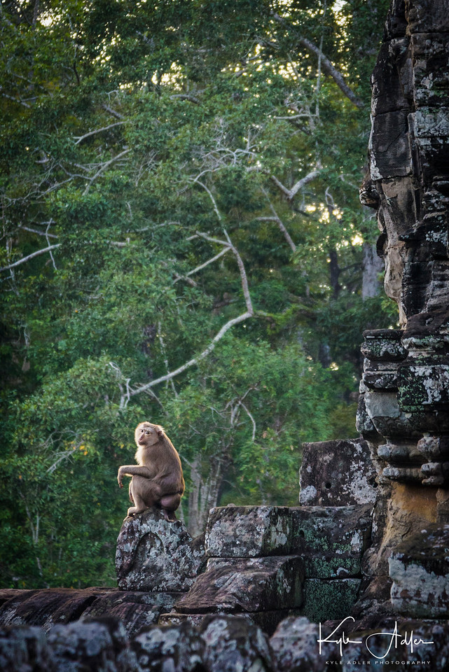 Another visitor reflects on life at Bayon Temple.