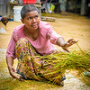 We visited a farm outside Siem Reap where women still thresh rice by hand.