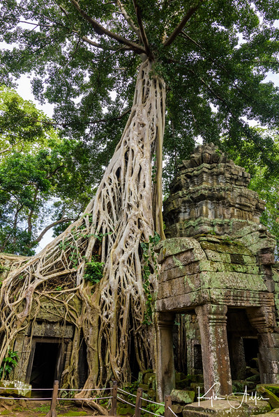 Not surprisingly, one of the Indiana Jones movies was filmed at Ta Prohm Temple.