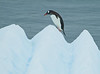 Penguin Progress