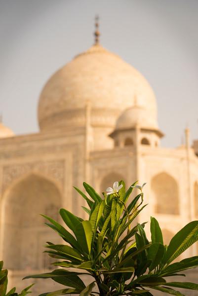 The Taj<br /> Agra, India