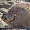 Smiling Seal