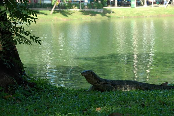 Monitor Lizard  - Bangkok, Thailand