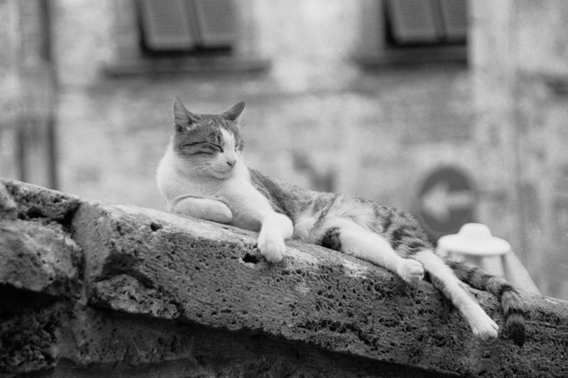 Tuscan Cat - San Gimignano, Italy