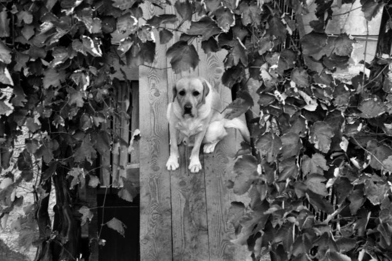 Dog on the Plank - Croatia