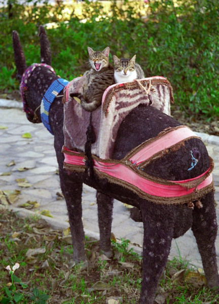 Cats on a Donkey - Istanbul, Turkey