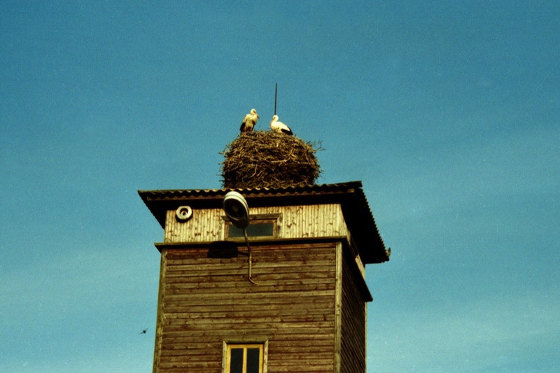 Stork Nest on the Roof - Estonia