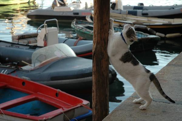 Cat Stretching - Camogli, Italy