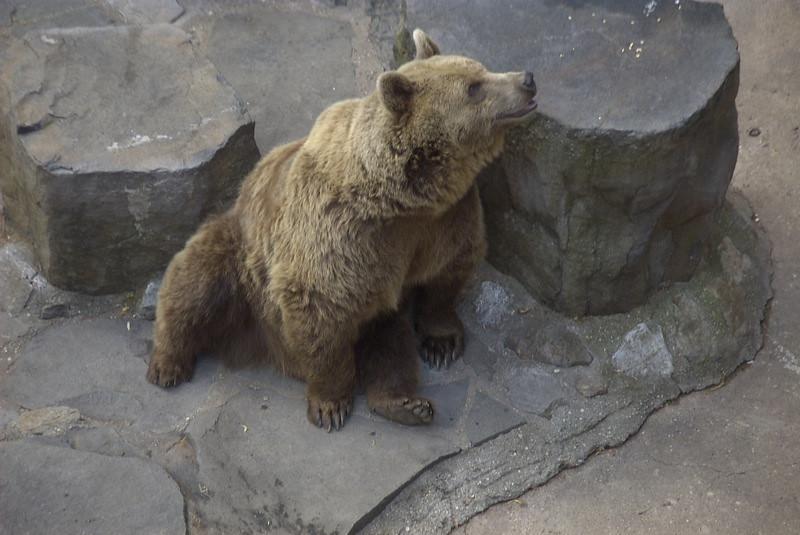 Bear - Cesky Krumlov, Czech Republic