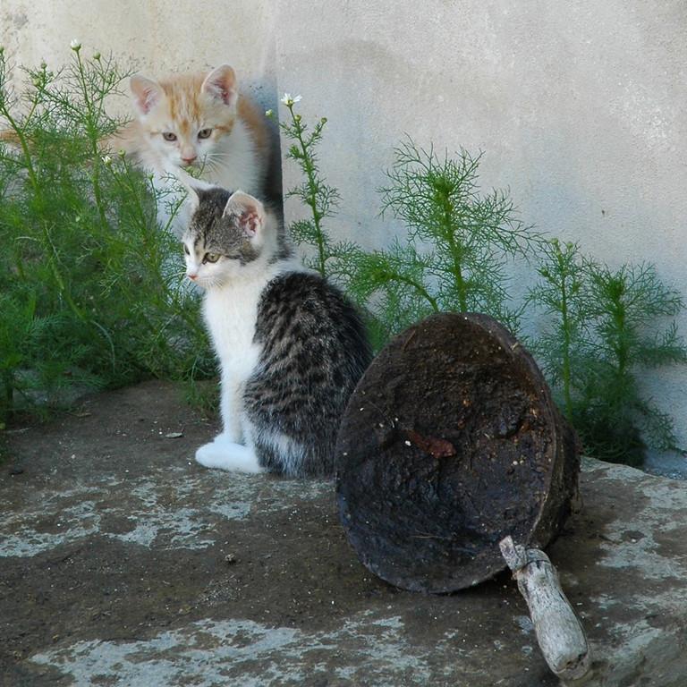 Cute Cats - Czech Republic
