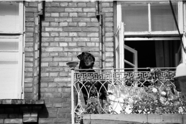 Dog in Uzupis Neighborhood - Vilnius, Lithuania