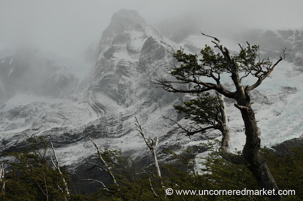 Nature's Harshness - Torres del Paine, Chile