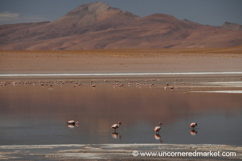 Desert Lake Flamingos - Salar Tour, Bolivia