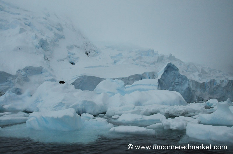 Seals Resting on Icebergs - Antarctica