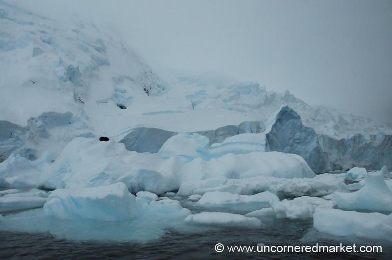 Seals Resting on Icebergs - Antarctica