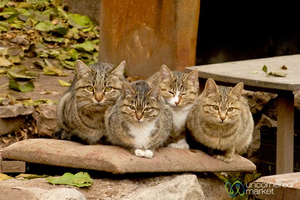 Cats Guarding the Armenian Church? Iran