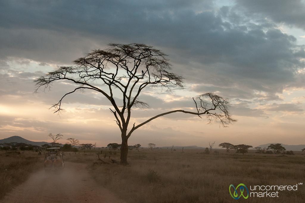 Safari Jeep Drives Off at Dusk - Serengeti, Tanzania