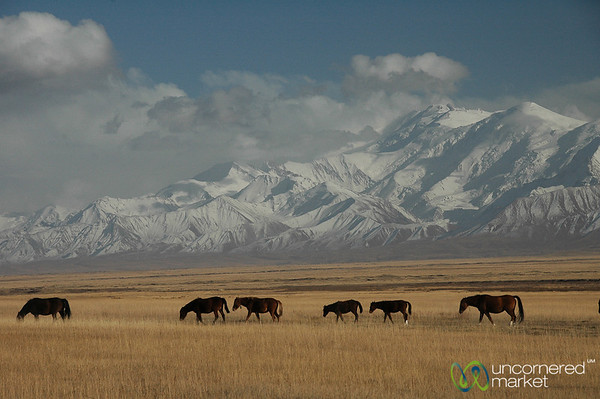 Line of Horses and Peak Lenin - Sary Tash, Kyrgyzstan