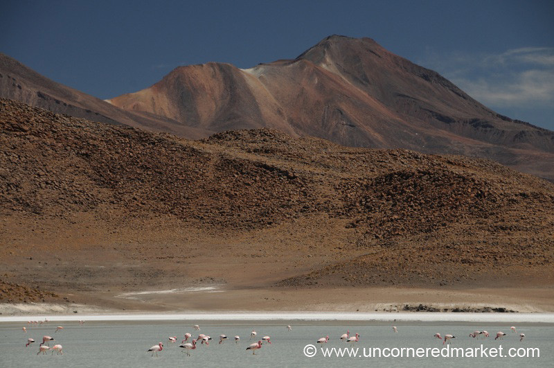 Flamingo Mountain - Salar Tour, Bolivia
