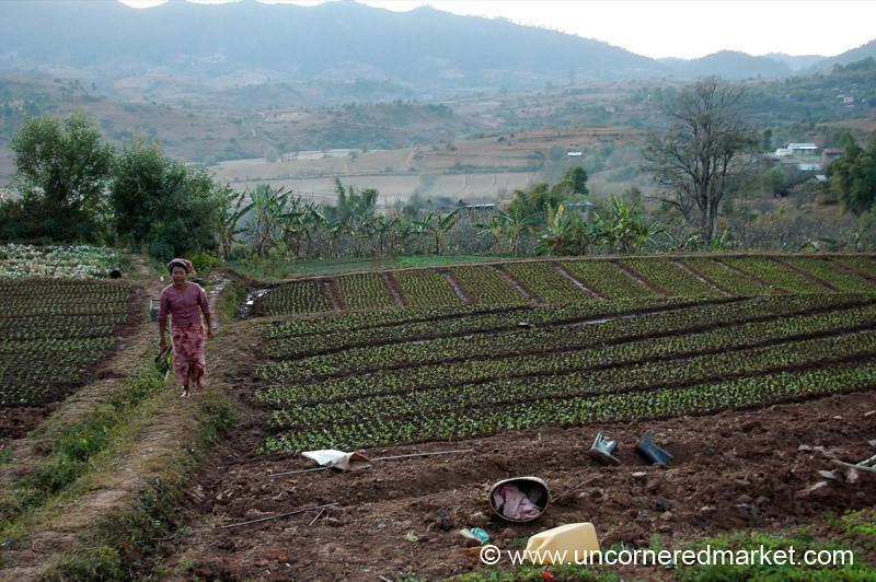 Gardening - Inle Lake, Burma