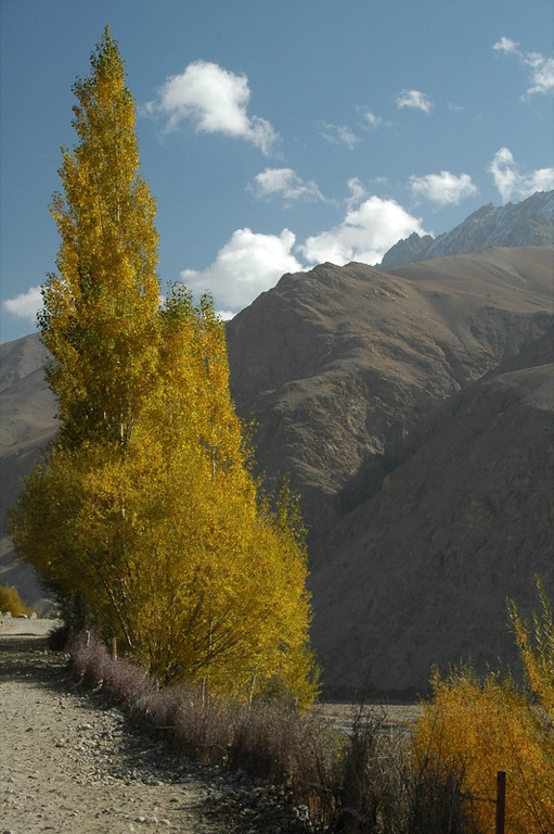 Autumn Leaves in Wakhan Valley - Pamir Mountains, Tajikistan