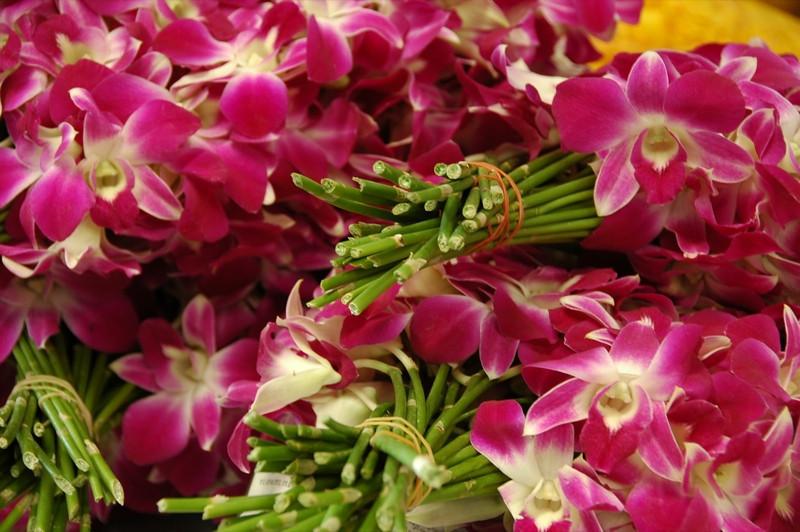 Orchids - Krabi, Thailand