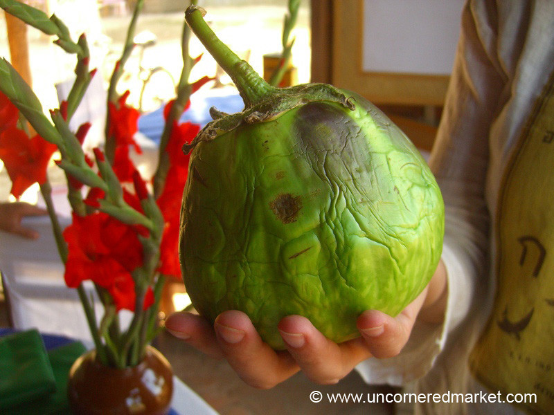 Round Eggplant (Auburgine) - Bagan, Burma