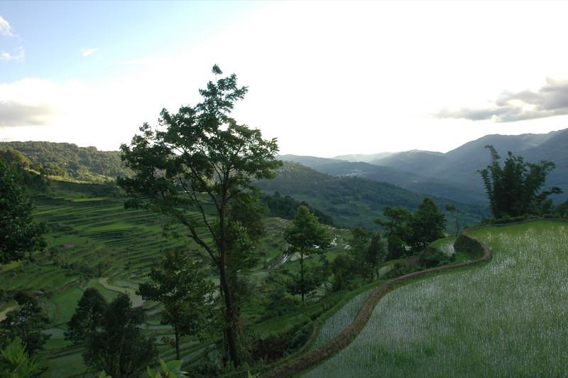Early Morning Light Yuanyang Rice Fields - Yunnan, China