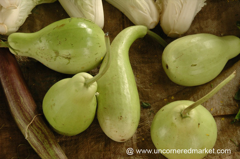 Green Squash - Xishuangbanna, China
