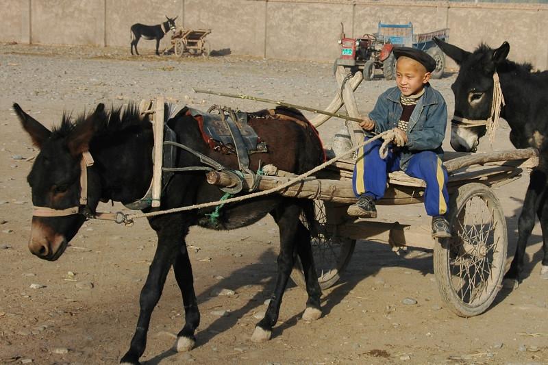 Uighur Boy in Donkey Cart - Kashgar, China
