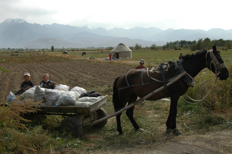 Kyrgyz Agriculture Along Lake Issyk-Kul, Kyrgyzstan