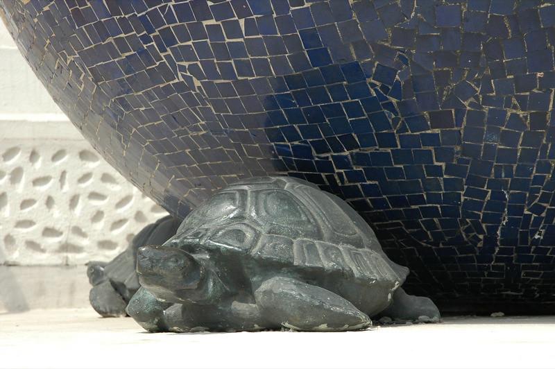 Atlas the Turtle - Vienna, Australia