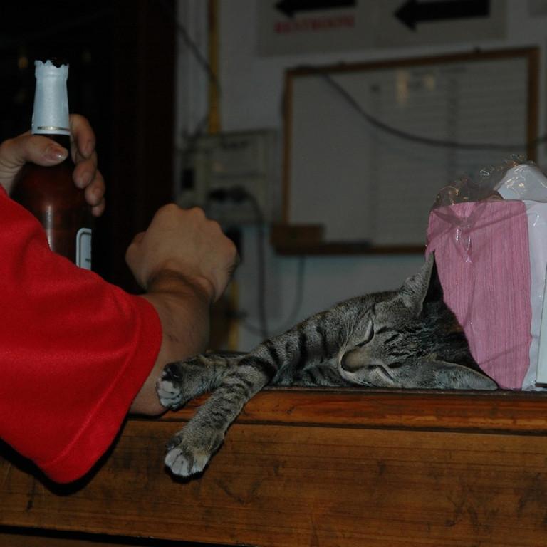 Napping Cat - Bangkok, Thailand