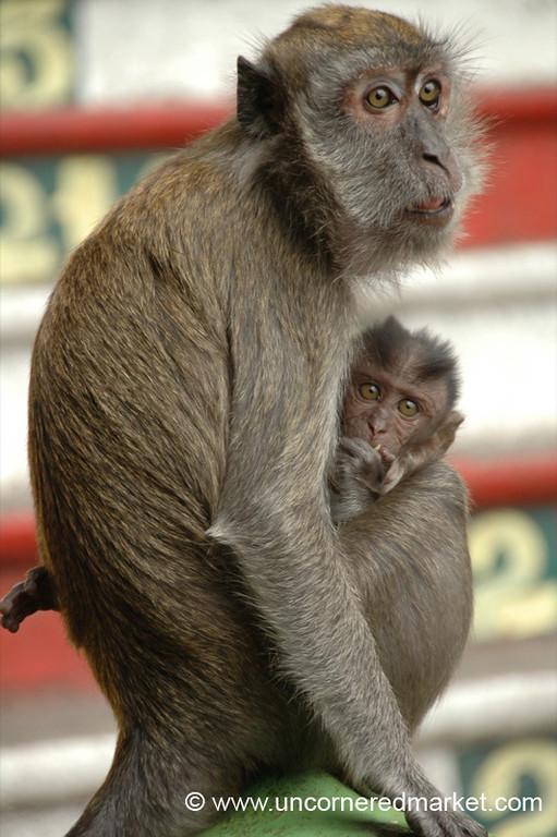 Mother and Child Macaques, Batu Caves - Kuala Lumpur, Malaysia