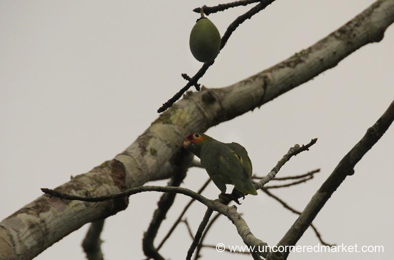 Parrot in Tree - Tikal, Guatemala