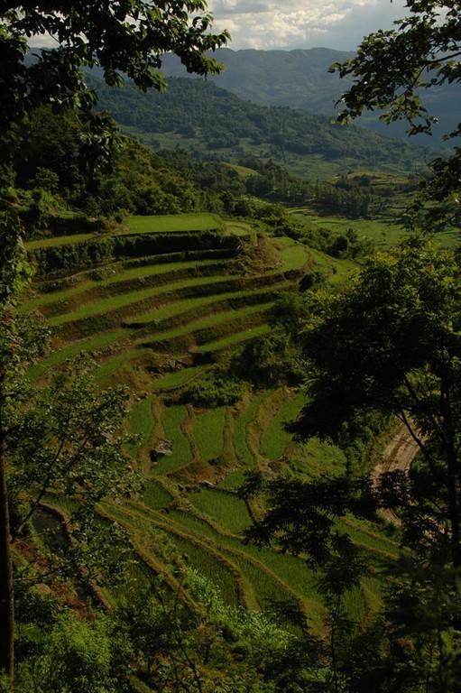 Yuanyang's Terraced Rice Fields - Yunnan, China