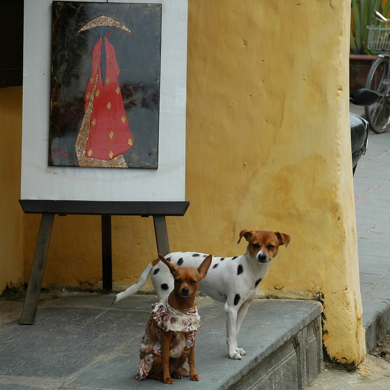 Two Dogs - Hoi An, Vietnam
