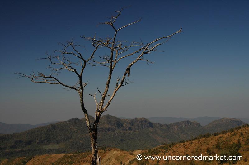 A Lone Tree - Inle Lake, Burma