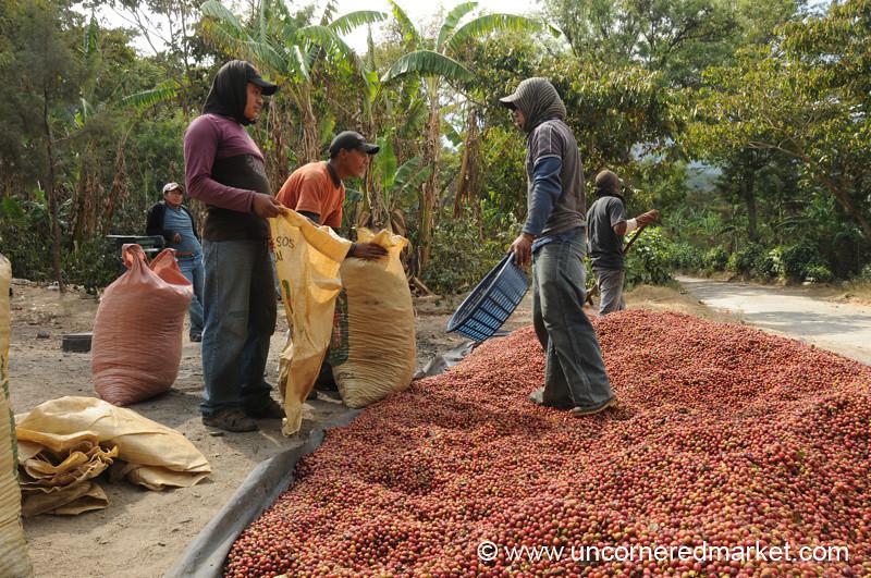Men Filling Coffee Sacks - Lake Atitlan, Guatemala