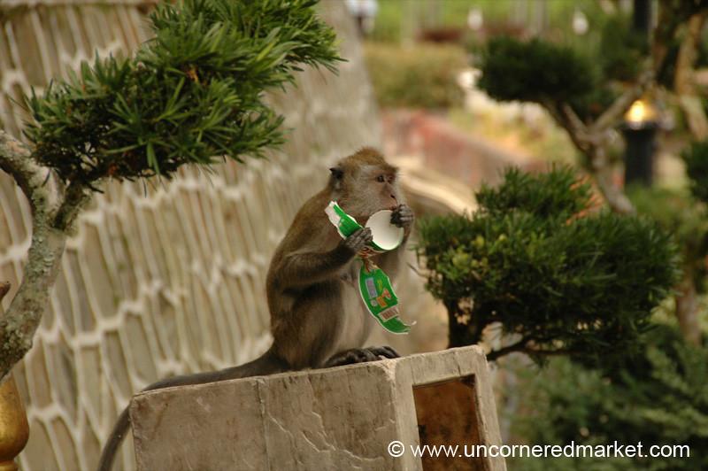 Hungry Monkey - Penang, Malaysia