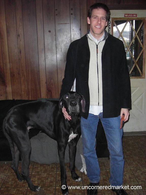 Great Dane and Dan - Scranton, Pennsylvania