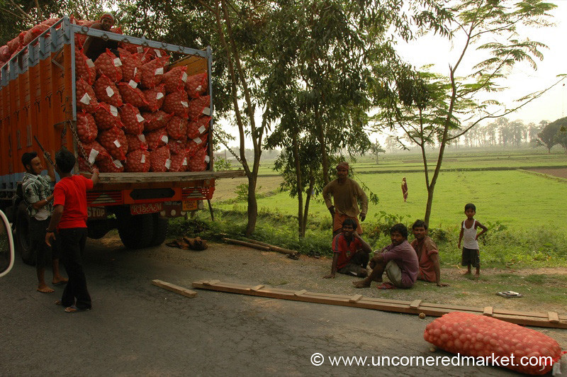 Potato Harvest Time - West Bengal, India