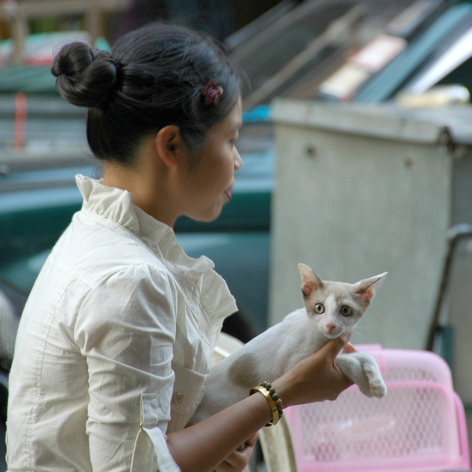 Lady with a Cat - Bangkok, Thailand