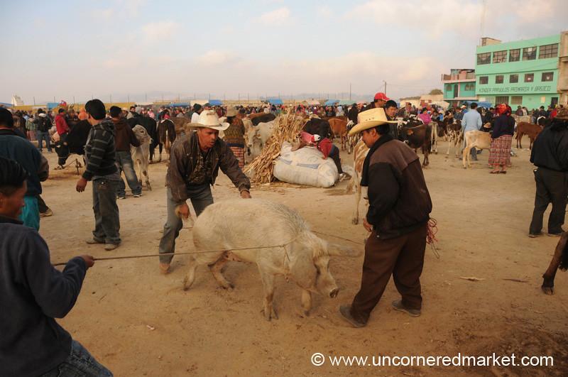 San Francisco El Alto Animal Market, Man Chasing Pig - Guatemala