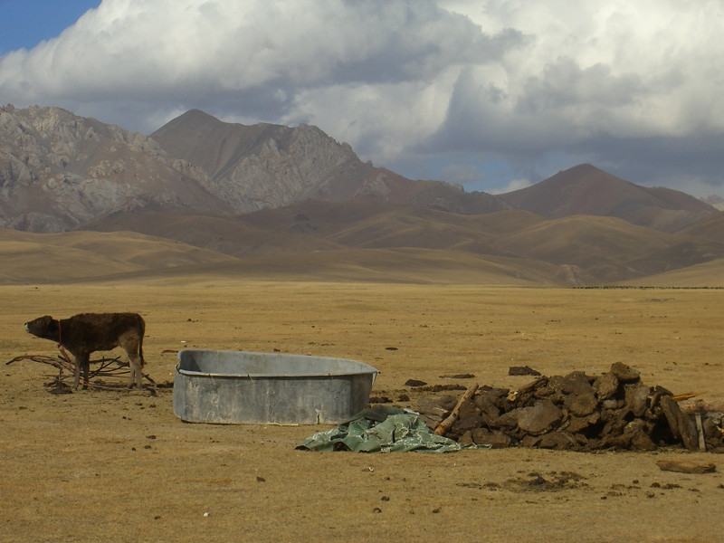Calf and Barren Landscape  - Song Kul Lake, Kyrgyzstan