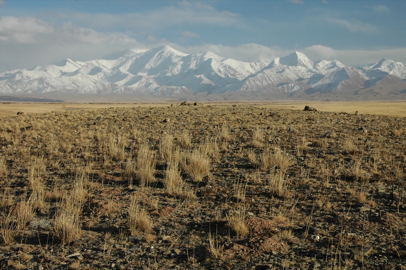 Autumn Fields and Snow-Covered Mountains - Sary Tash, Tajikisan