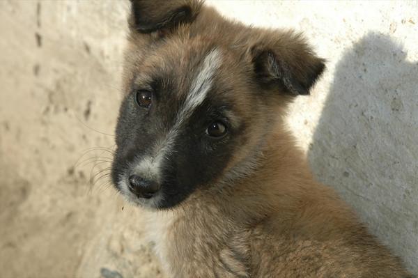 Cute Dog - Namadgut, Tajikistan