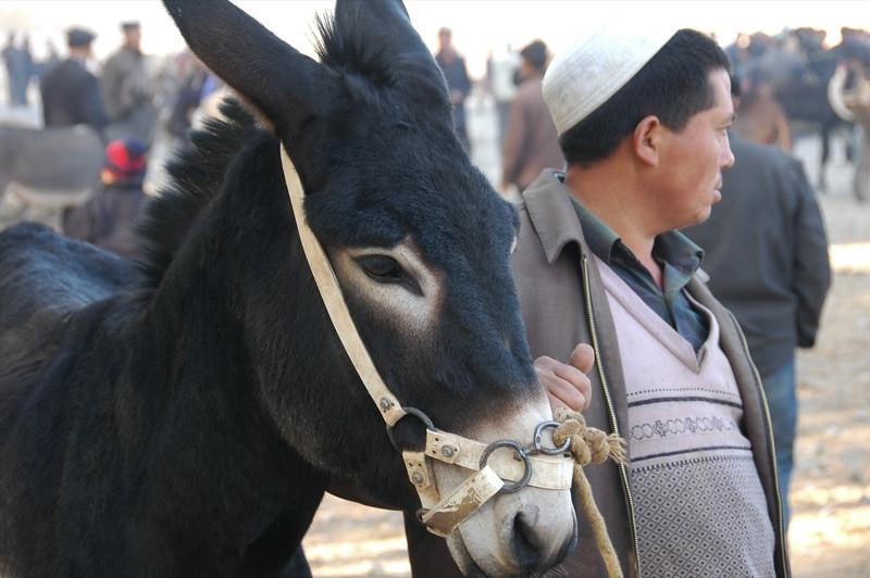 Kashgar Animal Market: Donkey - China