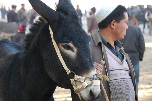 Kashgar Animal Market: Donkey - China